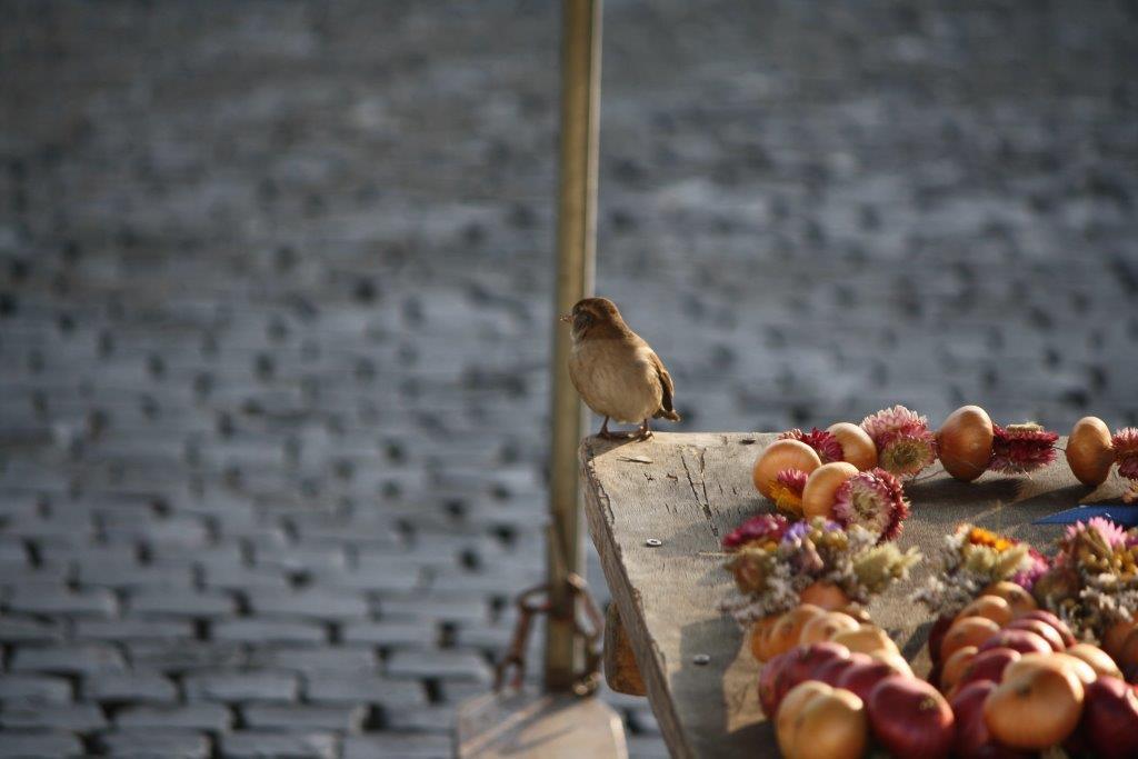 Weimar im Herbst  mit Zwiebeln (Foto Klaus Börger)